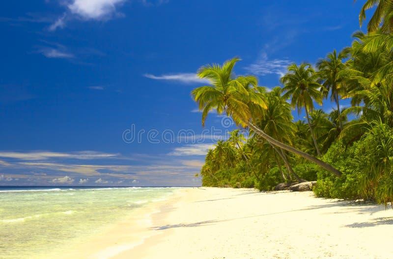 Floresta tropical agradável na praia no Oceano Índico fotos de stock royalty free