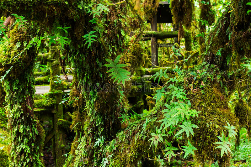 Floresta tropical bonita fotografia de stock royalty free