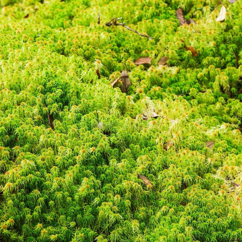 Floresta tropical bonita imagens de stock