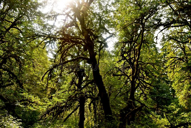 Floresta tropical da floresta primária fotografia de stock royalty free