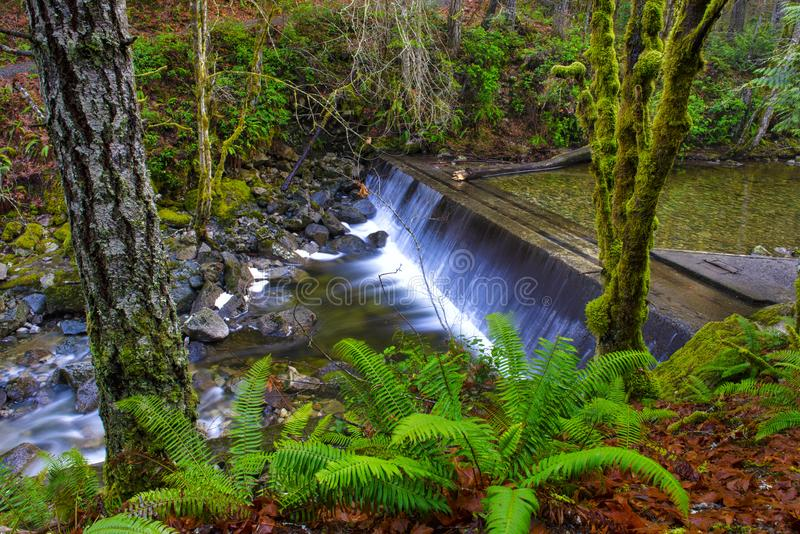 Floresta tropical da floresta primária na fuga de Holland Creek em Ladysmith, Vanc imagens de stock