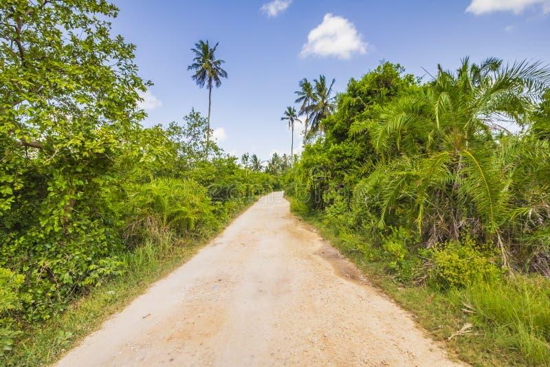 Floresta tropical da selva com trajeto e palmeiras de passeio em um dia ensolarado claro imagens de stock