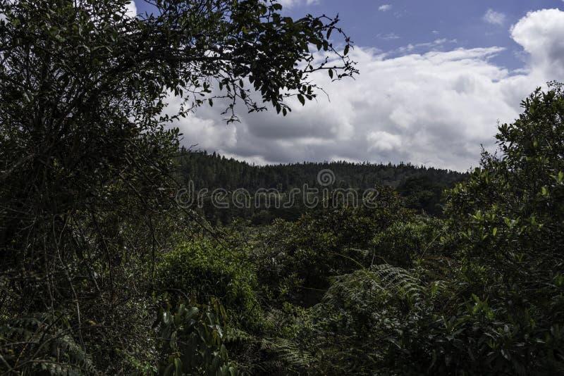 Floresta tropical tropical de Colômbia fotos de stock