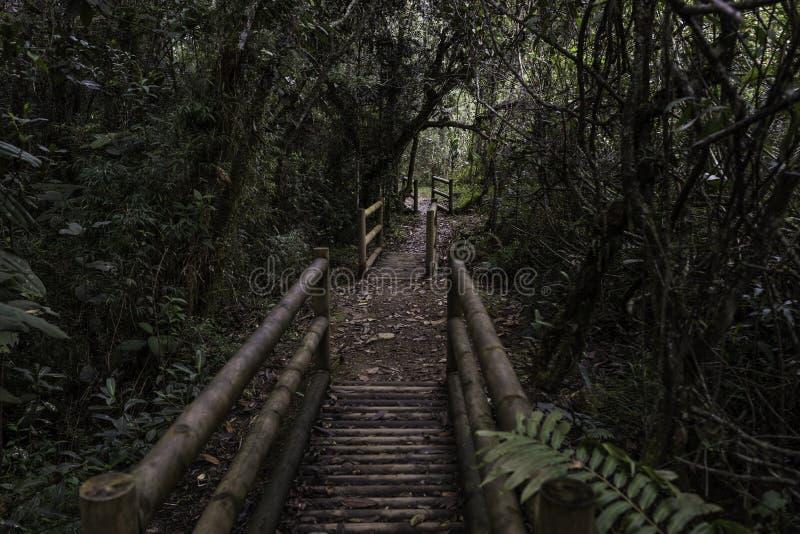 Floresta tropical tropical de Colômbia fotos de stock royalty free
