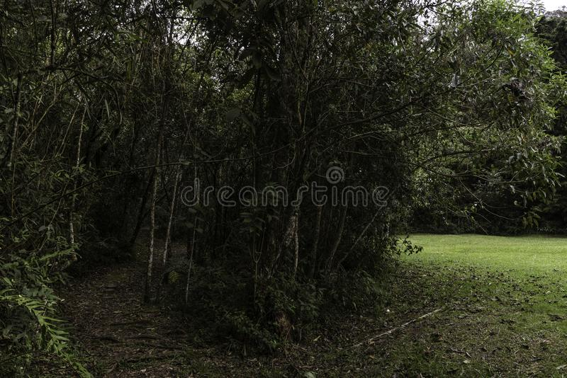 Floresta tropical tropical de Colômbia foto de stock royalty free