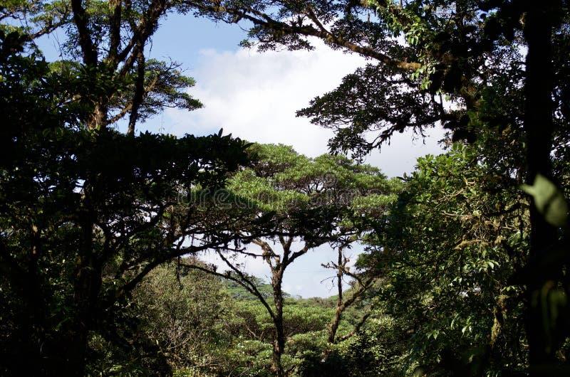 Floresta tropical de Costa Rican fotos de stock royalty free