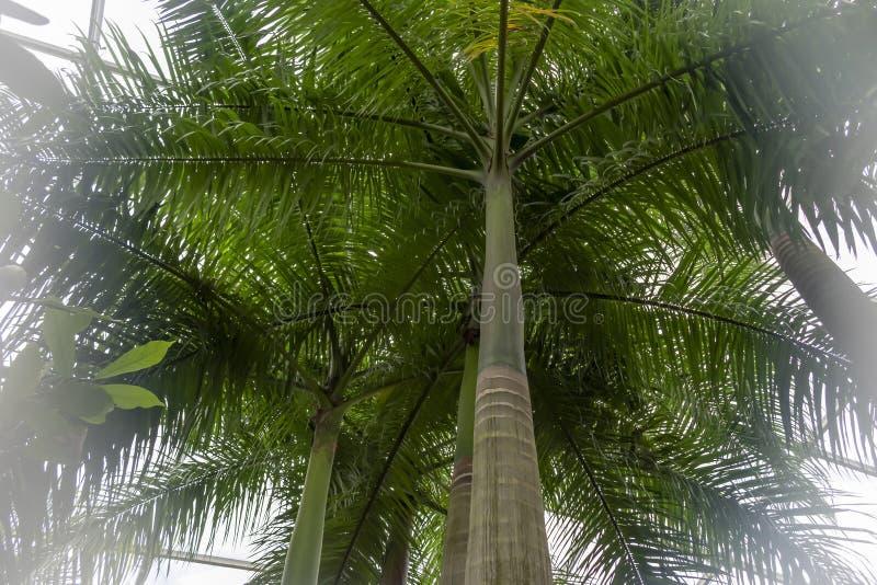 Floresta tropical dentro de uma estufa que representa Gondwanaland foto de stock royalty free