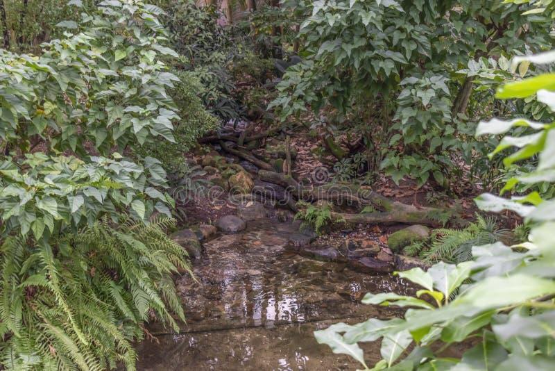 Floresta tropical dentro de uma estufa que representa Gondwanaland imagens de stock