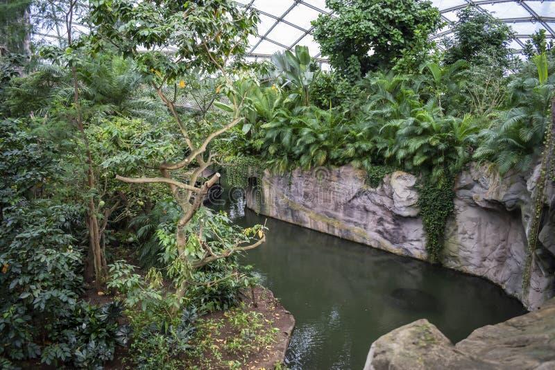 Floresta tropical dentro de uma estufa que representa Gondwanaland imagem de stock