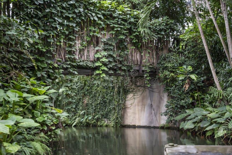 Floresta tropical dentro de uma estufa que representa Gondwanaland fotos de stock royalty free