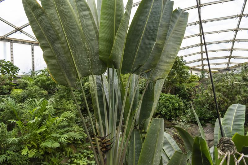 Floresta tropical dentro de uma estufa que representa Gondwanaland fotografia de stock