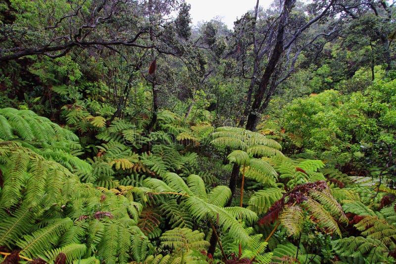 Floresta tropical em arredores do tubo de lava do thurston imagens de stock