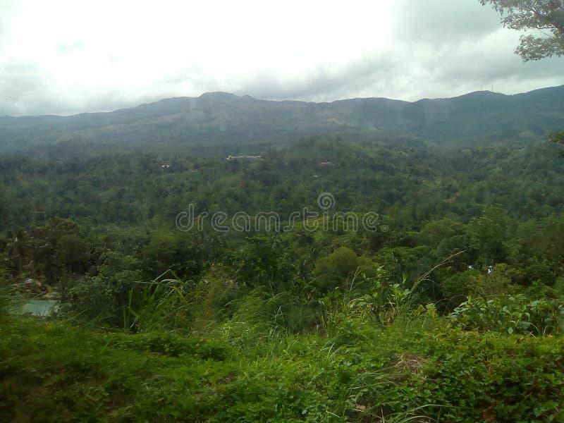 floresta tropical em para baixo para o sul fotografia de stock royalty free