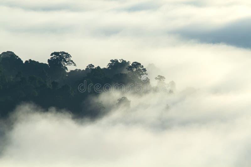 Floresta tropical na paisagem do vale da montanha da manhã sobre a névoa, no ponto de vista Khao Kai Nui, Phang Nga, Tailândia imagem de stock