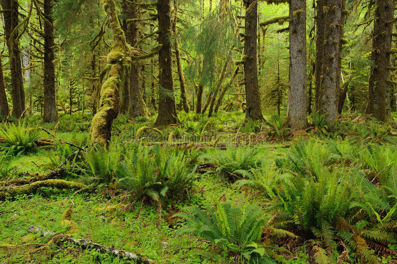 Floresta tropical no parque olímpico fotografia de stock