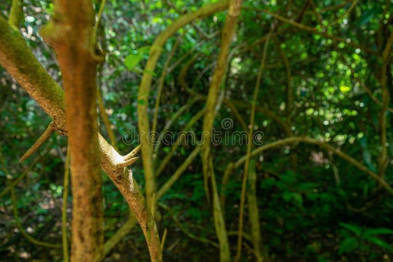 Floresta tropical para a textura dos fundos imagem de stock royalty free