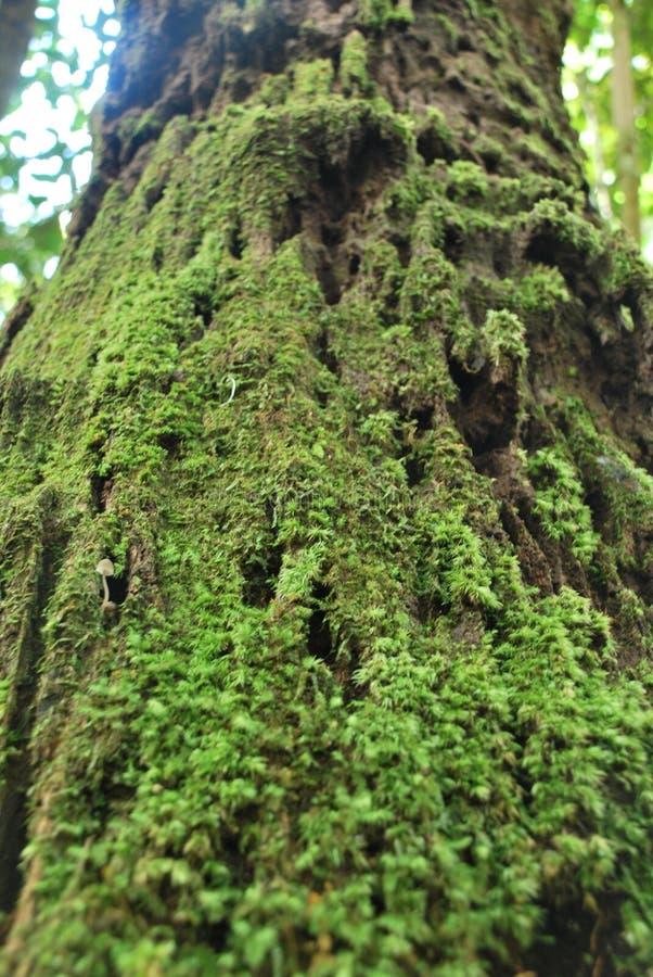 A floresta tropical sempre-verde em PhuKradueng imagem de stock royalty free