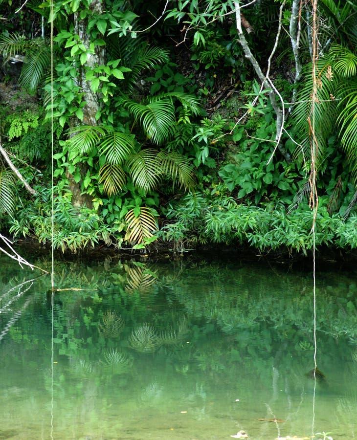 Floresta tropical tropical fotografia de stock