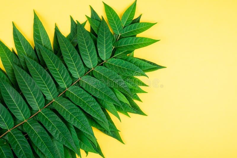 A floresta tropical verde deixa as veias macro sobre fundo amarelo fotografia de stock