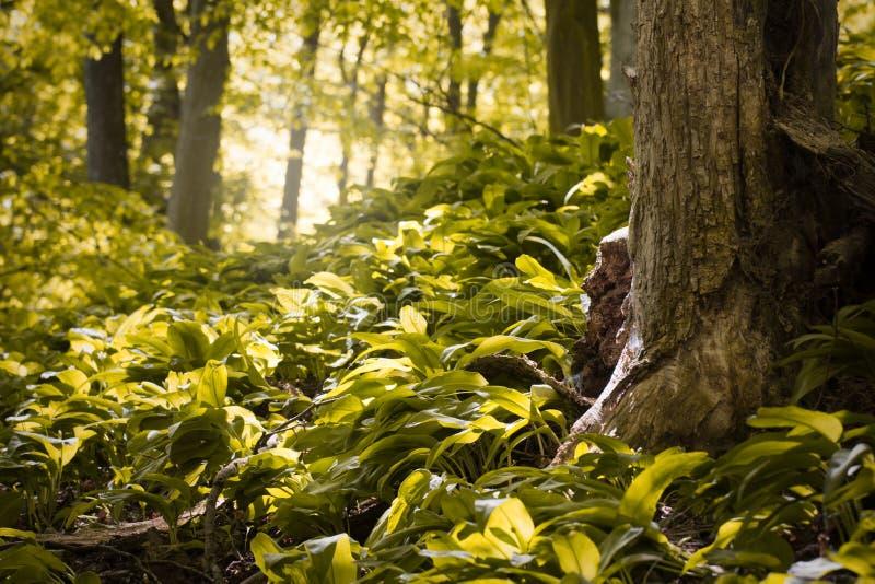 Floresta verde bonita fotos de stock royalty free