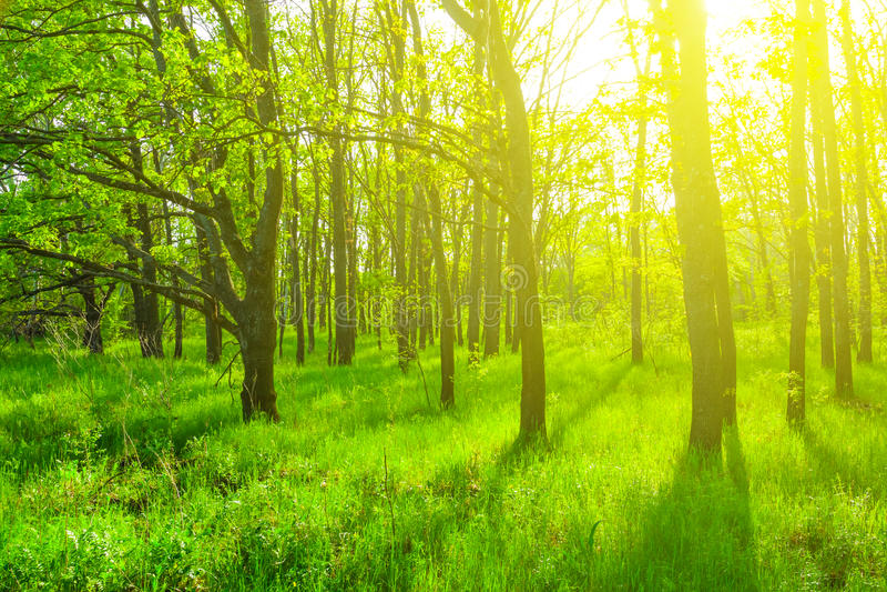 Floresta verde bonita da mola foto de stock