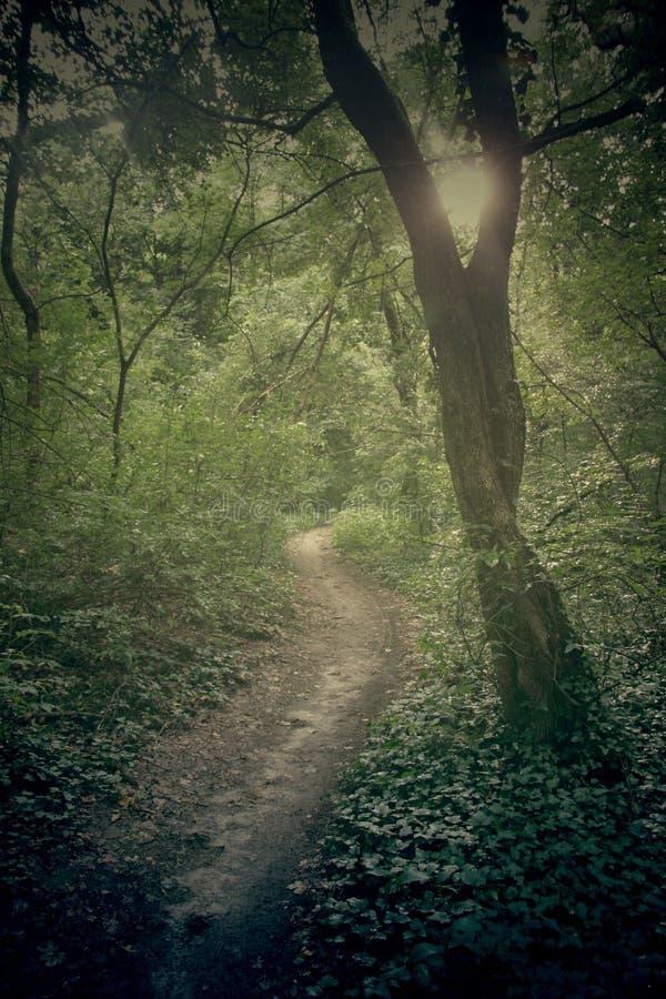 Floresta verde com lvy e a árvore foto de stock royalty free