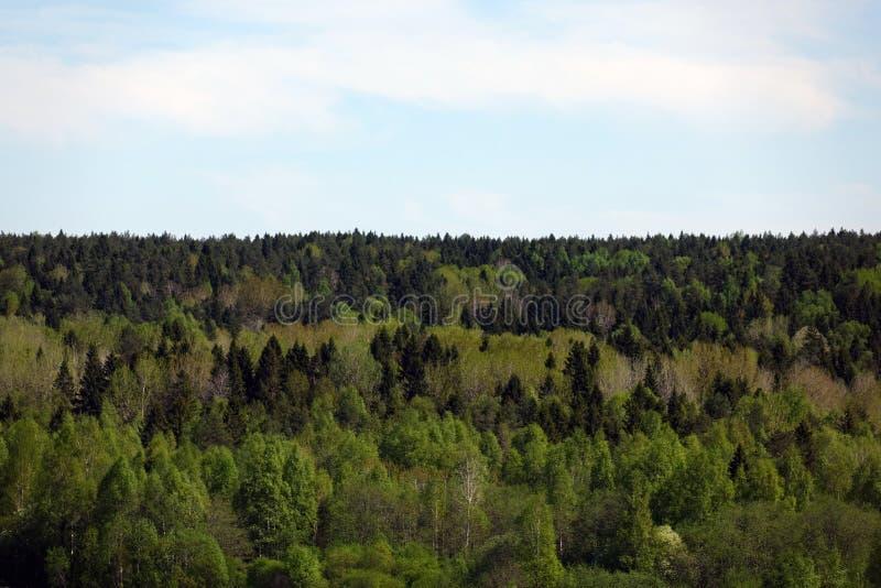 Floresta verde da árvore do fundo, vista da altura do voo do ` s do pássaro nos pinhos frescos foto de stock