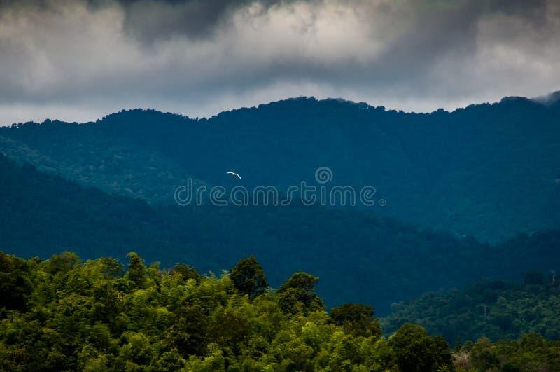 Floresta verde da montanha em Tailândia imagem de stock