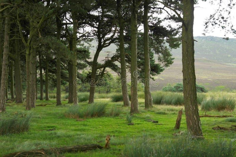 Floresta verde nas montanhas imagens de stock