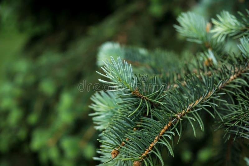 Floresta verde nova do ramo de árvore fotos de stock royalty free