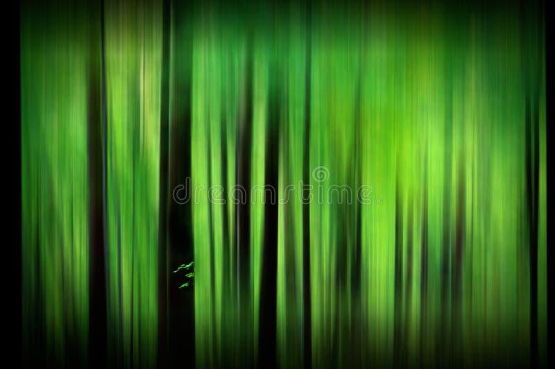Floresta verde obscura abstrata misteriosa fotos de stock royalty free
