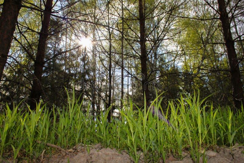 Floresta viva fotos de stock