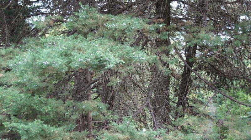 Florestas, árvores, natureza, ar fresco, beleza, vegetação foto de stock