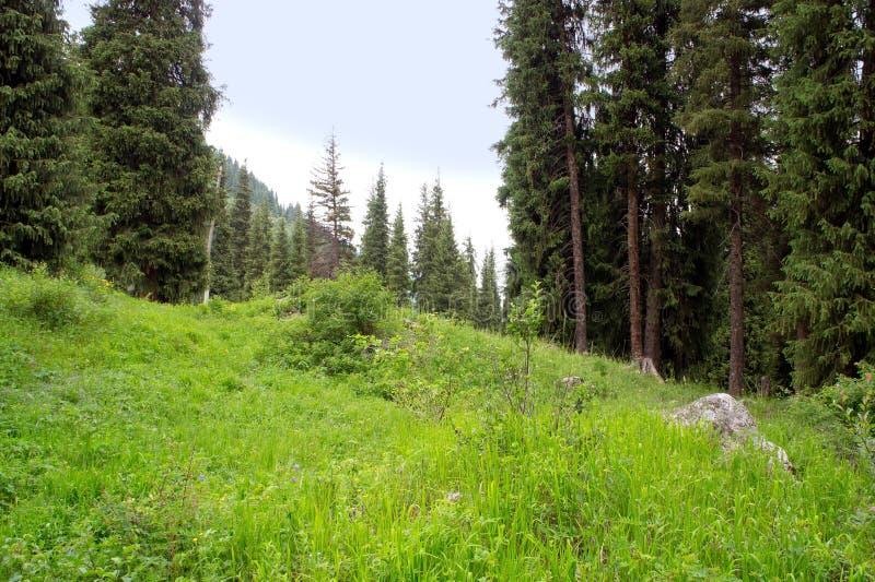 Florestas alpinas imagens de stock