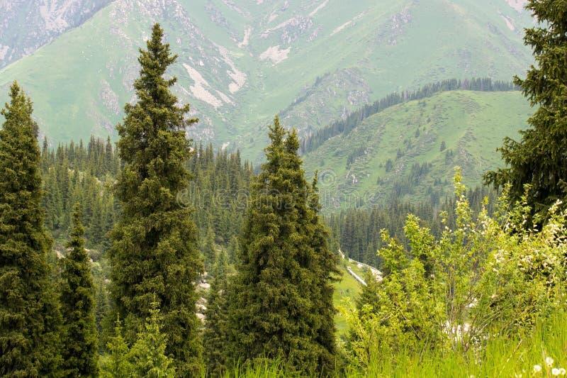 Florestas alpinas imagem de stock