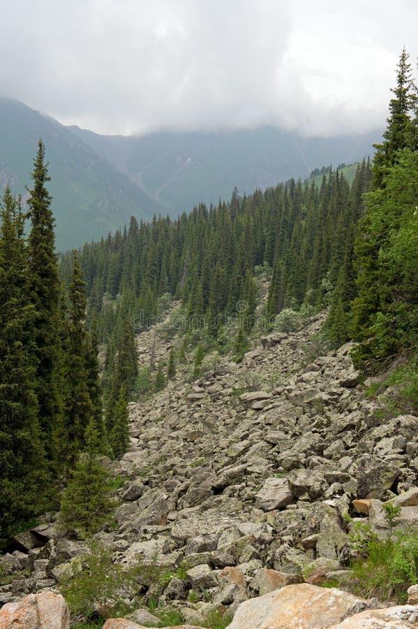 Florestas alpinas fotografia de stock