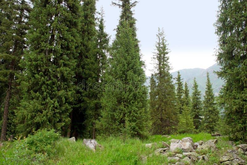 Florestas alpinas foto de stock royalty free