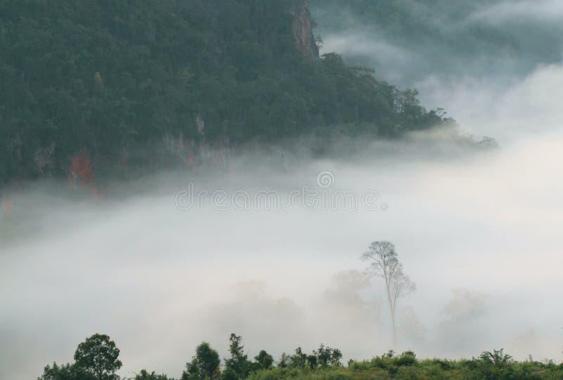 Florestas da montanha que cobrem com a baixa névoa de encontro no amanhecer imagens de stock