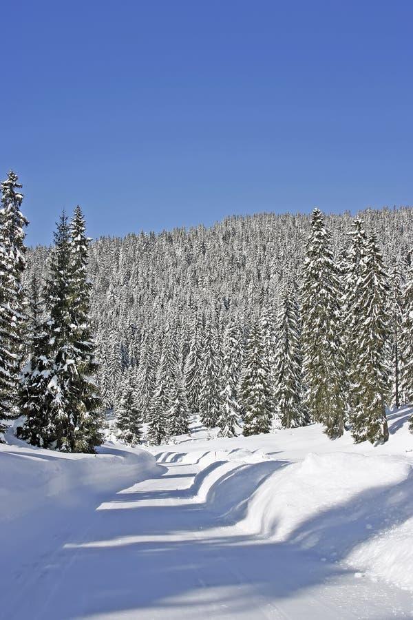 Florestas da neve na montanha foto de stock