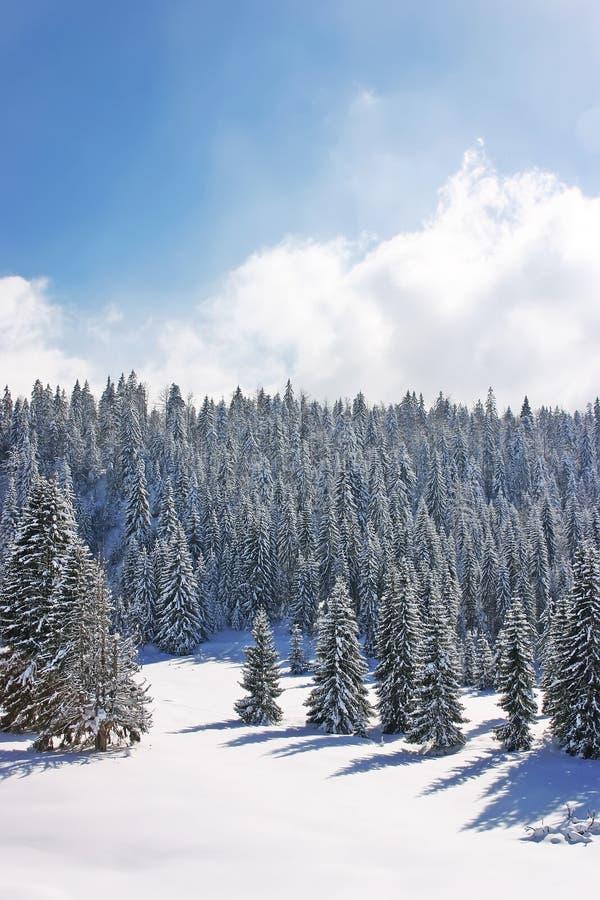 Florestas da neve na montanha fotografia de stock royalty free