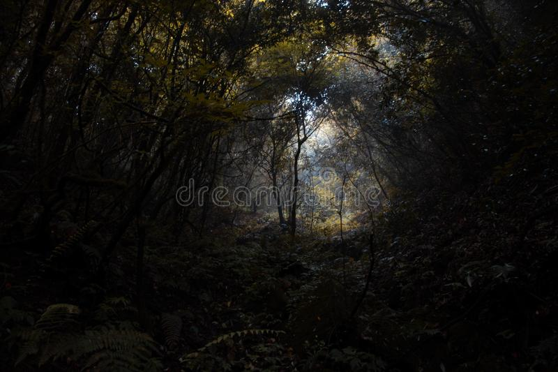 Florestas grossas profundas do outono com ambiente escuro imagens de stock