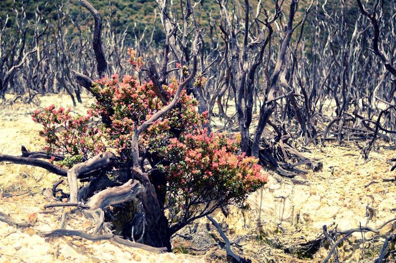 Florestas inoperantes nas montanhas fotografia de stock