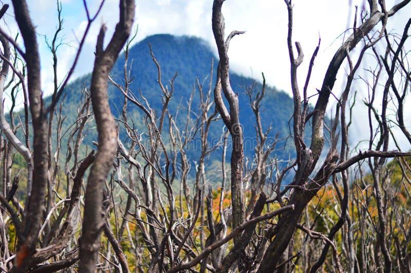 Florestas inoperantes nas montanhas imagem de stock