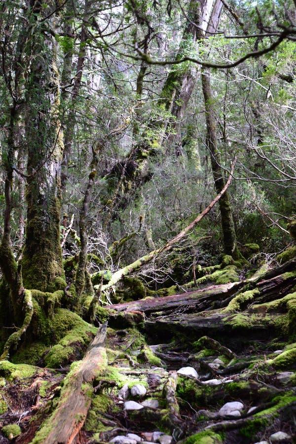 Florestas profundas, Tasmânia imagens de stock royalty free