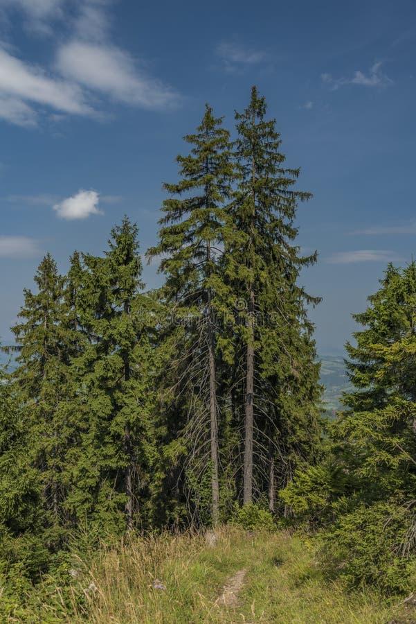 Florestas sob o monte de Velky Choc em Eslováquia norte no verão fotos de stock