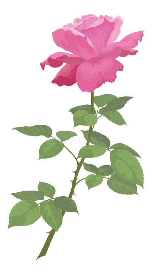 Florezca color de rosa stock de ilustración