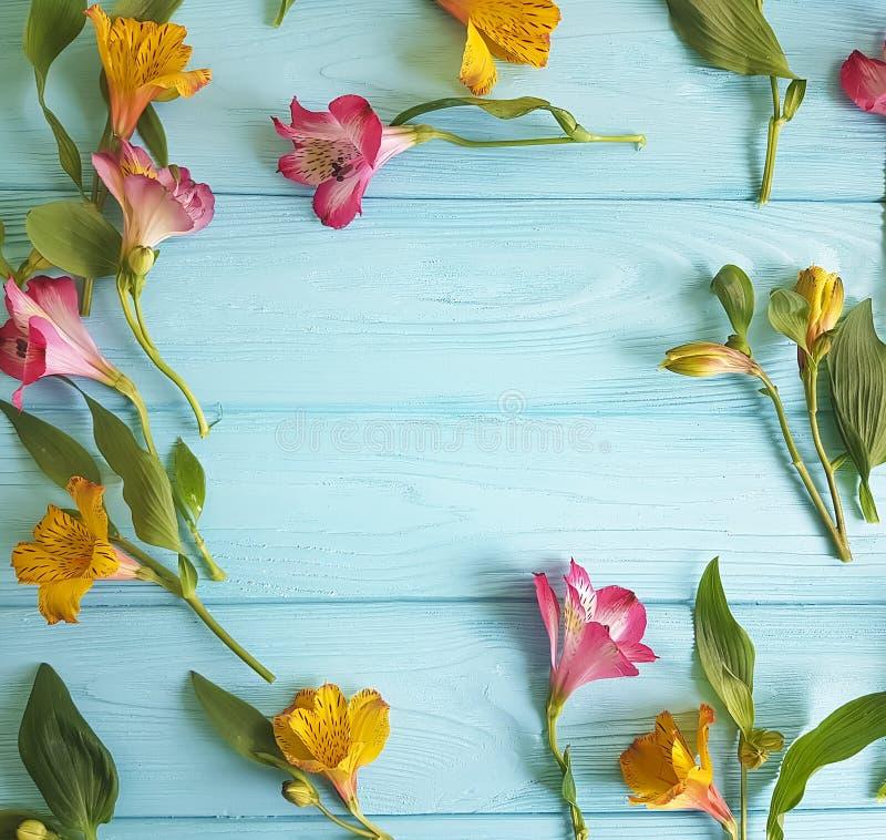 Florezca decorativo floral floreciente en un fondo de madera del color, marco del alstroemeria foto de archivo libre de regalías