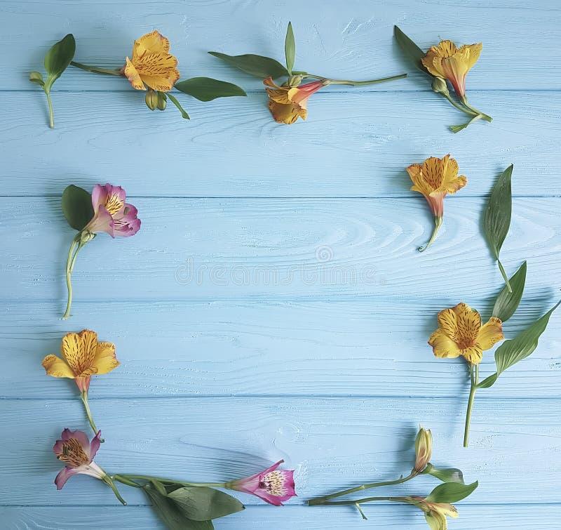 Florezca decorativo romántico floreciente en un fondo de madera del color, marco de la belleza del alstroemeria fotografía de archivo