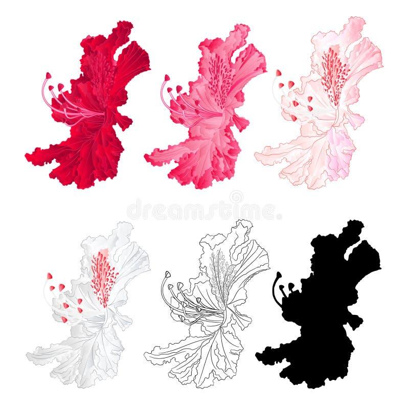 Florezca el arbusto de la montaña del rododendro rojo, rosado, rosa claro, blanco, el esquema y la silueta en una floración blanc stock de ilustración