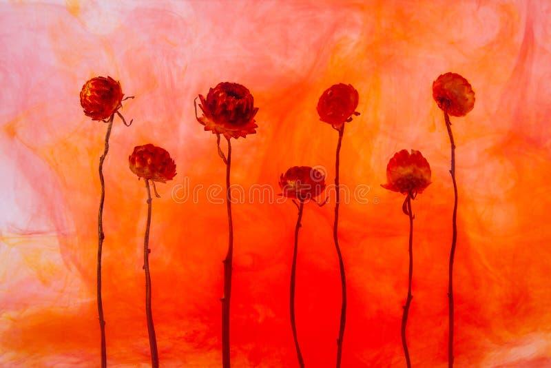 Florezca el blanco rojo del fondo del agua dentro debajo de aperol de acrílico de la naranja de las flores del otoño de las rayas stock de ilustración